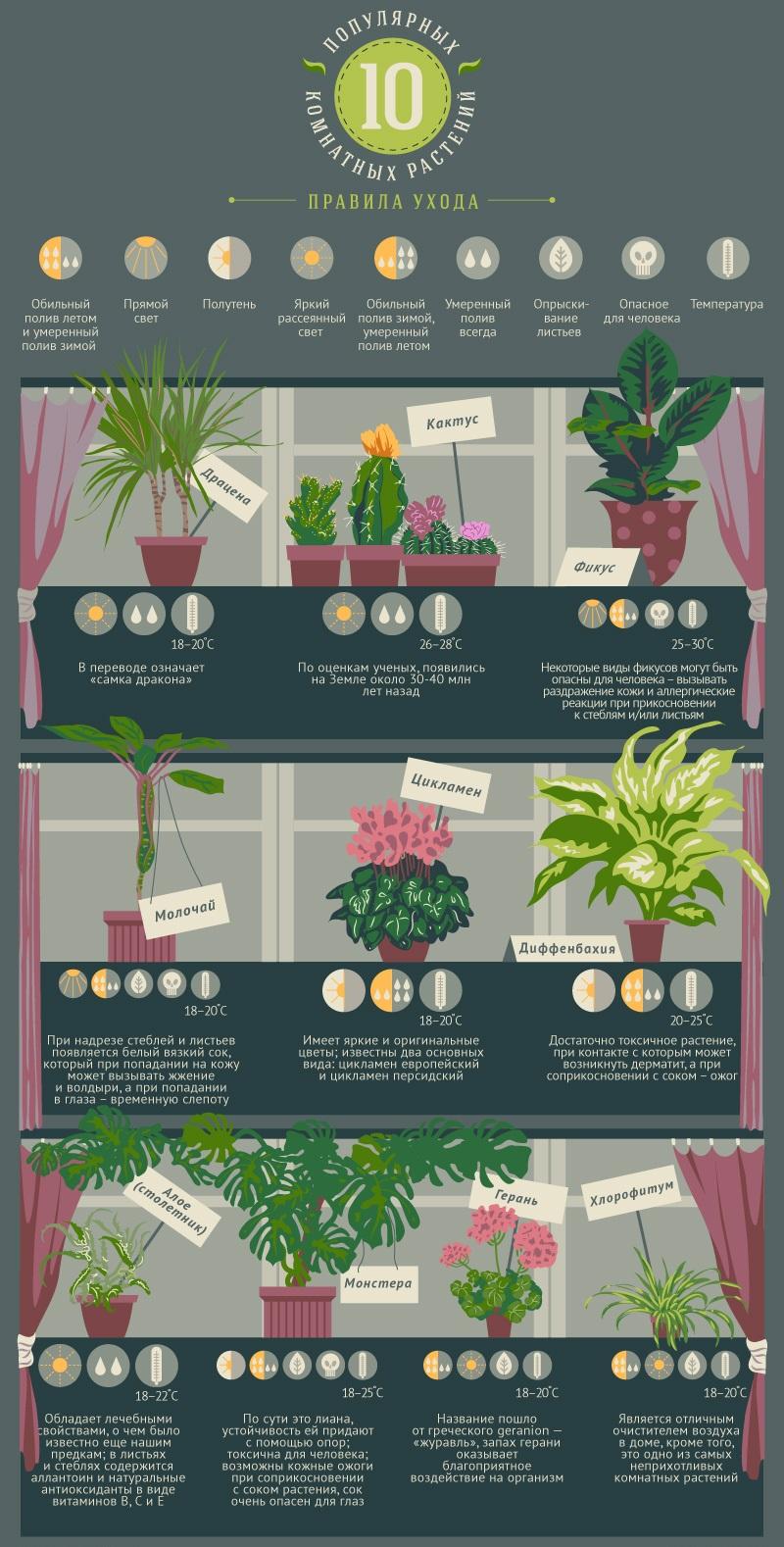 Популярные комнатные растения и правила ухода за ними